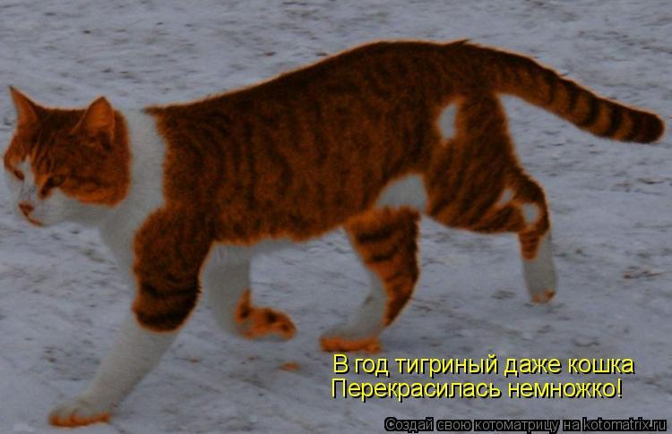 Котоматрица: В год тигриный даже кошка Перекрасилась немножко!