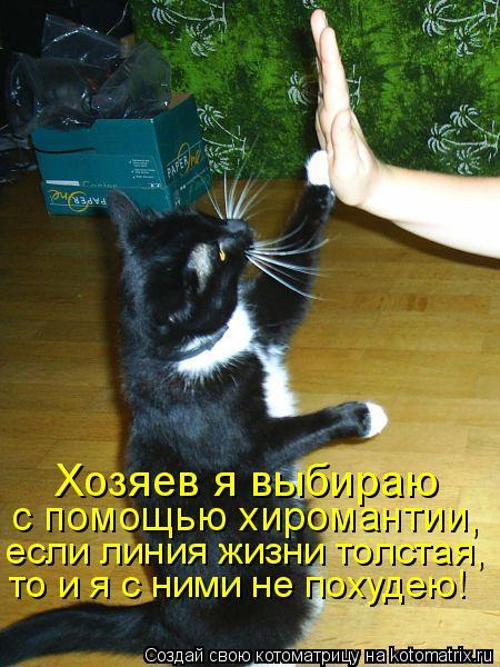 Котоматрица: Хозяев я выбираю  с помощью хиромантии,  если линия жизни толстая,  то и я с ними не похудею!
