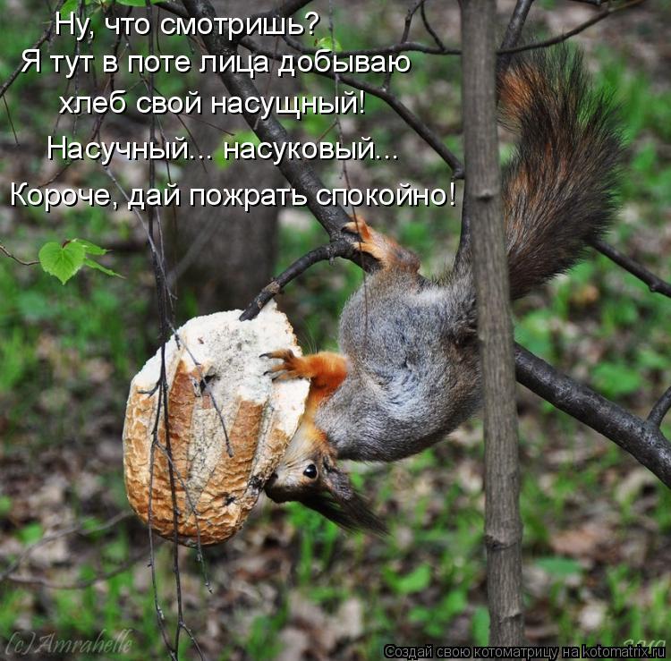 Котоматрица: Ну, что смотришь?  Я тут в поте лица добываю  хлеб свой насущный! Насучный... насуковый...  Короче, дай пожрать спокойно!