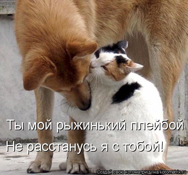 Котоматрица: Ты мой рыжинький плейбой Не расстанусь я с тобой!