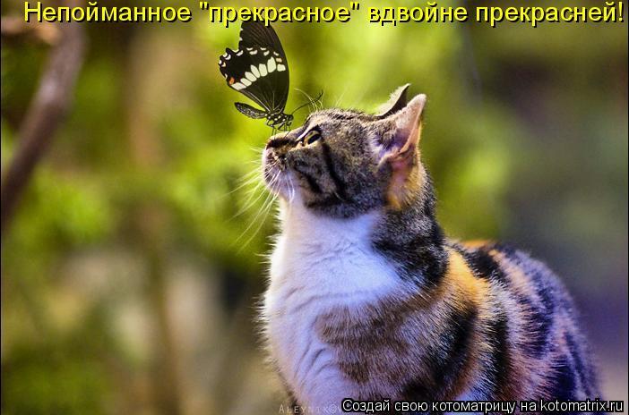 """Котоматрица: Непойманное """"прекрасное"""" вдвойне прекрасней!"""