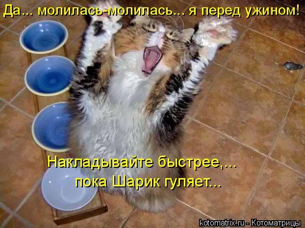 Котоматрица: Да... молилась-молилась….. я перед ужином!  пока Шарик гуляет... Накладывайте быстрее,...