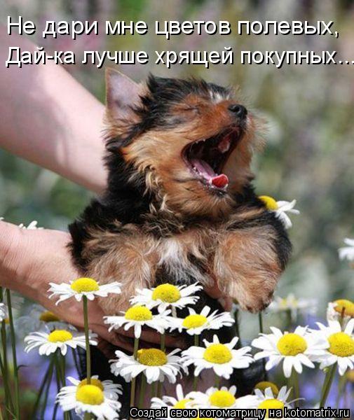 Котоматрица: Не дари мне цветов полевых, Дай-ка лучше хрящей покупных...