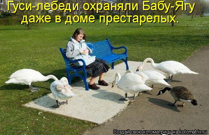 Котоматрица: Гуси-лебеди охраняли Бабу-Ягу  даже в доме престарелых.