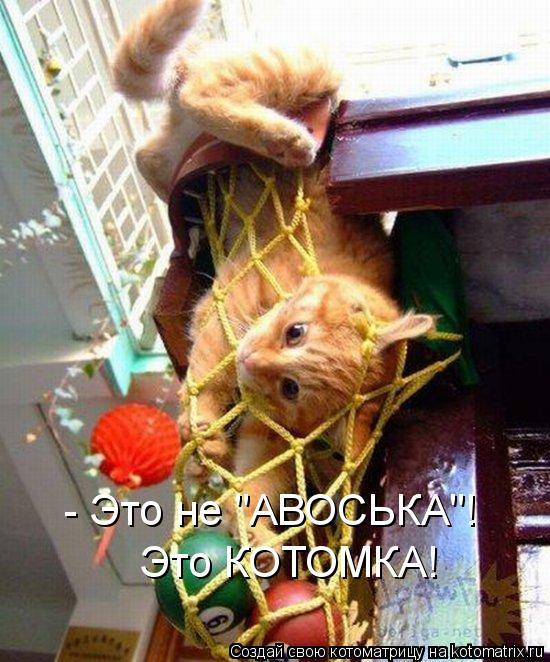 "Котоматрица: - Это не ""АВОСЬКА""! Это КОТОМКА!"