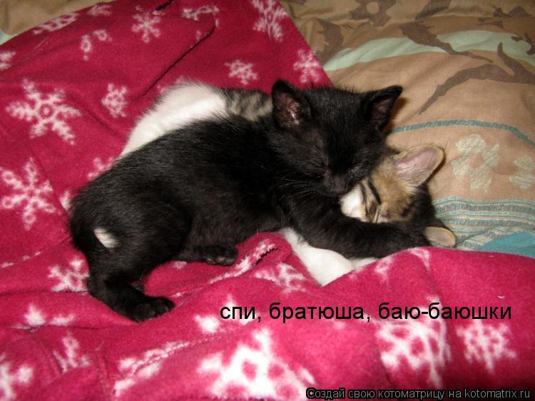Котоматрица: спи, братюша, баю-баюшки