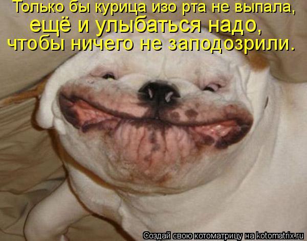 Котоматрица: Только бы курица изо рта не выпала,  ещё и улыбаться надо,  чтобы ничего не заподозрили.