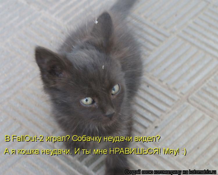 Котоматрица: В FallOut-2 играл? Собачку неудачи видел? А я кошка неудачи. И ты мне НРАВИШЬСЯ! Мяу! :)
