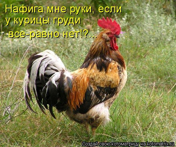 Котоматрица: Нафига мне руки, если у курицы груди  все-равно нет!?...