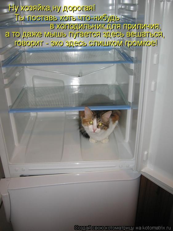 Котоматрица: Ну хозяйка,ну дорогая! Ты поставь хоть что-нибудь  в холодильник,для приличия, а то даже мышь пугается здесь вешаться, говорит - эхо здесь сли