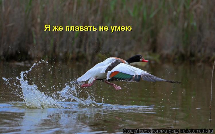 Котоматрица: Я же плавать не умею Я же плавать не умею