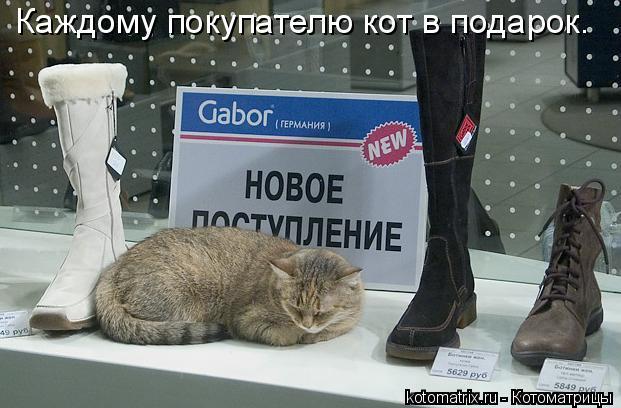 Котоматрица: Каждому покупателю кот в подарок.