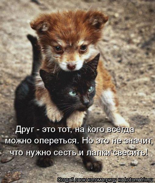 Котоматрица: Друг - это тот, на кого всегда  можно опереться. Но это не значит, что нужно сесть и лапки свесить!