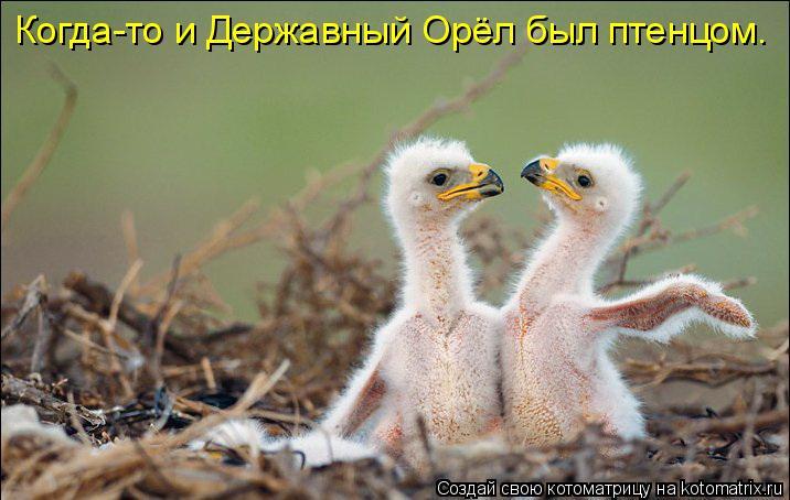 Котоматрица: Когда-то и Державный Орёл был птенцом.