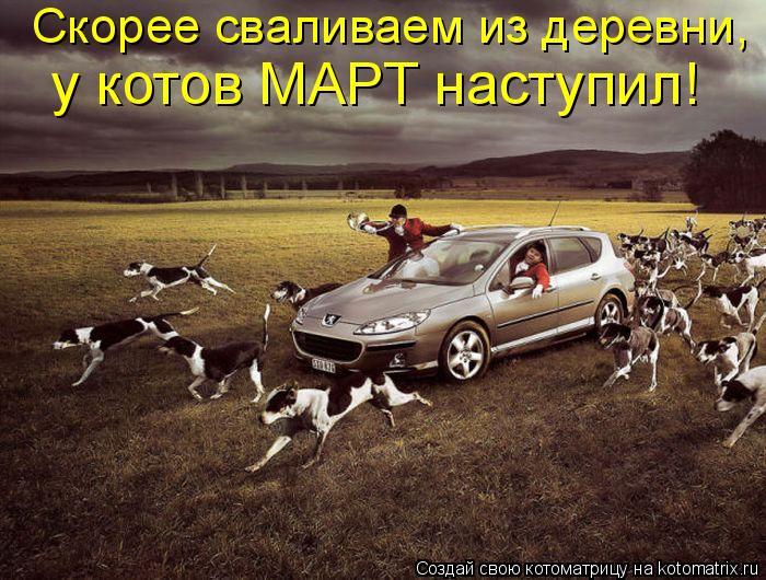 Котоматрица: Скорее сваливаем из деревни,  у котов МАРТ наступил!