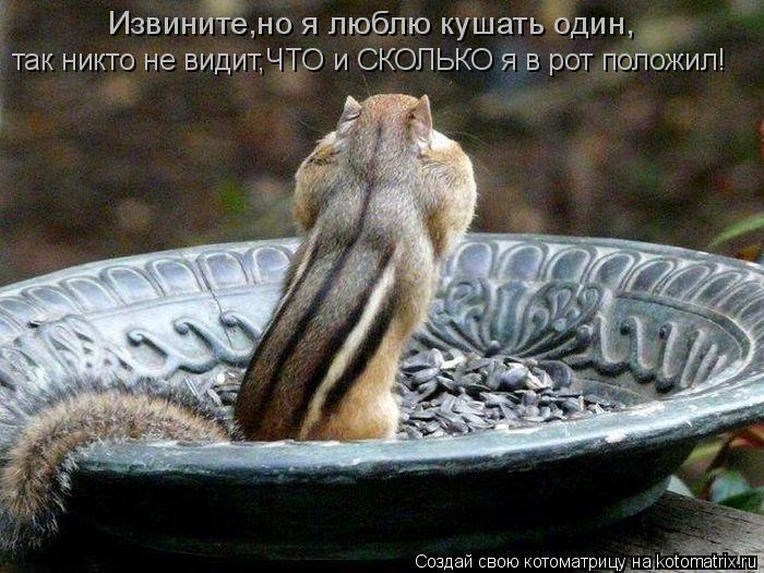 Котоматрица: Извините,но я люблю кушать один, так никто не видит,ЧТО и СКОЛЬКО я в рот положил!