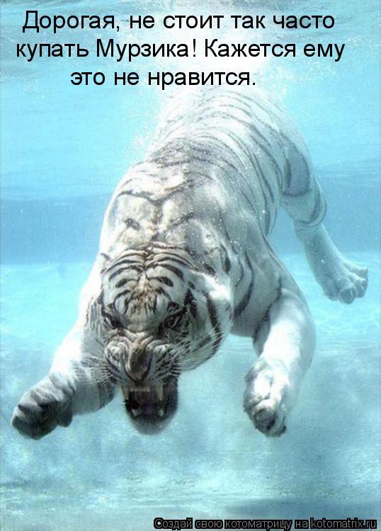 Дорогая, не стоит так часто купать Мурзика! Кажется ему  это не нравится.