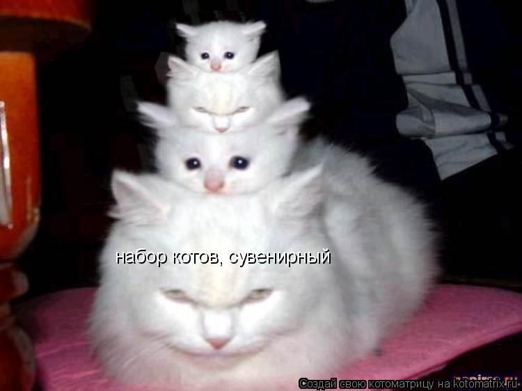Котоматрица: набор котов, сувенирный