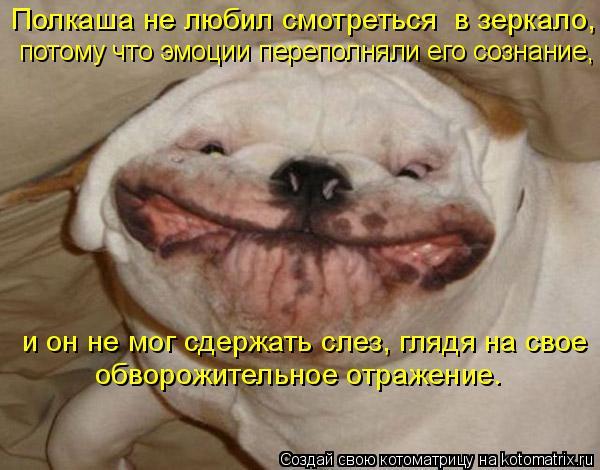 Котоматрица: Полкаша не любил смотреться  в зеркало,   потому что эмоции переполняли его сознание, обворожительное отражение.  и он не мог сдержать слез,