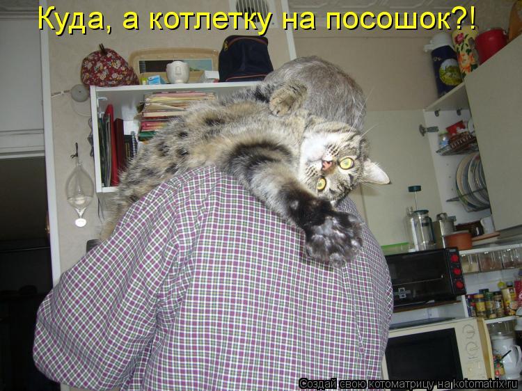 Котоматриця!)))) - Страница 3 568417
