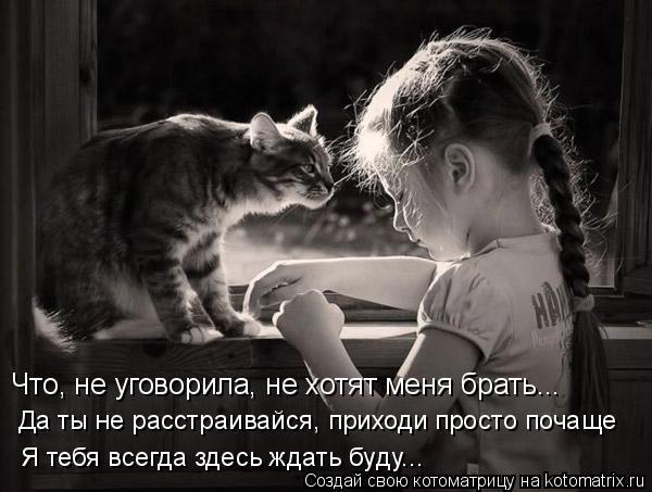 Котоматрица: Что, не уговорила, не хотят меня брать... Да ты не расстраивайся, приходи просто почаще Я тебя всегда здесь ждать буду...