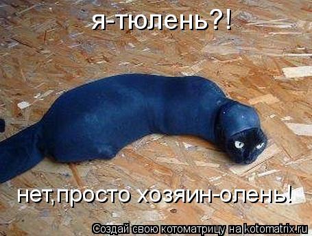 Котоматрица: я-тюлень?! нет,просто хозяин-олень!