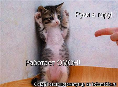 Котоматрица: Руки в гору! Работает ОМОН!