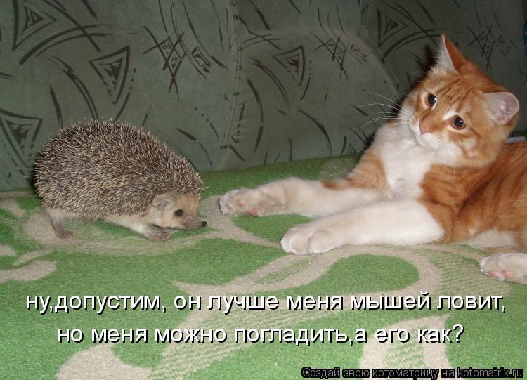 Котоматрица: ну,допустим, он лучше меня мышей ловит, но меня можно погладить,а его как?