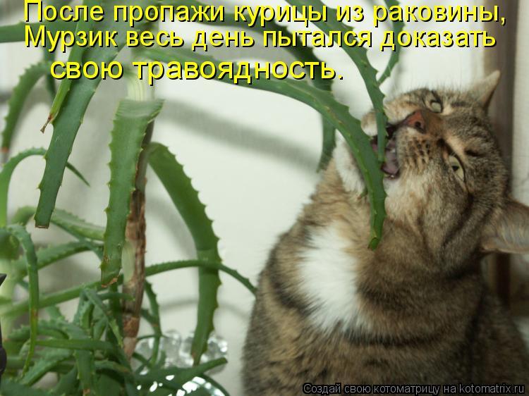 Котоматрица: После пропажи курицы из раковины,  Мурзик весь день пытался доказать  свою травоядность.