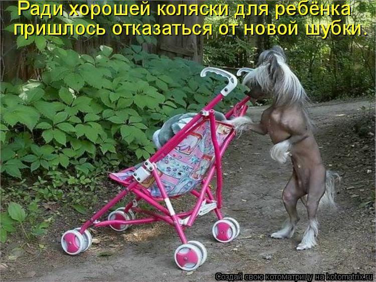 Котоматрица: Ради хорошей коляски для ребёнка  пришлось отказаться от новой шубки.