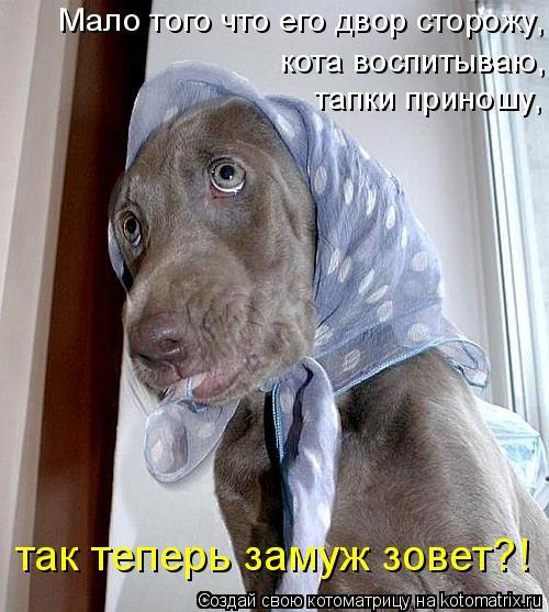 Котоматрица: Мало того что его двор сторожу, кота воспитываю, тапки приношу,  так теперь замуж зовет?!