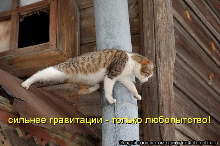 Котоматрица: сильнее гравитации - только любопытство!