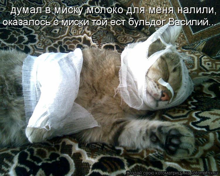 Котоматрица: думал в миску молоко для меня налили, оказалось с миски той ест бульдог Василий...