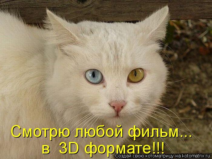 Котоматрица: Смотрю любой фильм... в  3D формате!!!