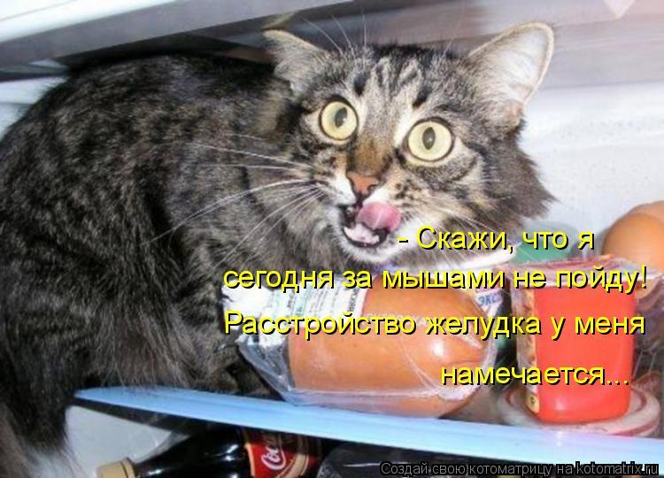 Котоматрица: - Скажи, что я  сегодня за мышами не пойду! Расстройство желудка у меня  намечается...