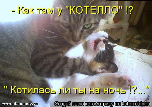 """Котоматрица: - Как там у """"КОТЕЛЛО"""" !? """" Котилась ли ты на ночь !?..."""""""