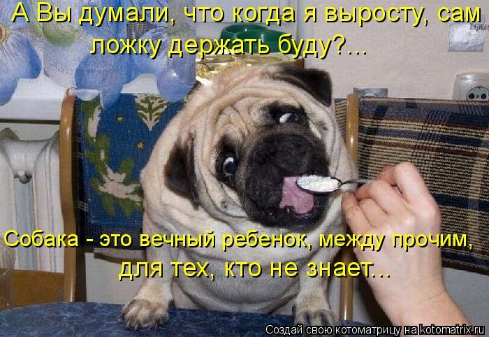 Котоматрица: А Вы думали, что когда я выросту, сам  ложку держать буду?...  для тех, кто не знает... Собака - это вечный ребенок, между прочим,