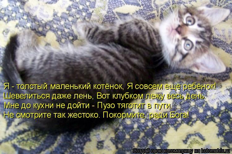 Котоматрица: Я - толстый маленький котёнок, Я совсем ещё ребёнок! Шевелиться даже лень, Вот клубком лежу весь день.  Мне до кухни не дойти - Пузо тяготит в п