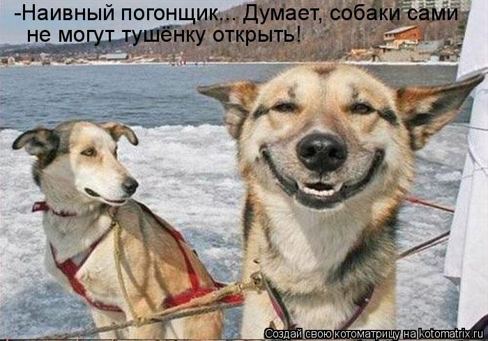 Котоматрица: -Наивный погонщик... Думает, собаки сами  не могут тушёнку открыть!