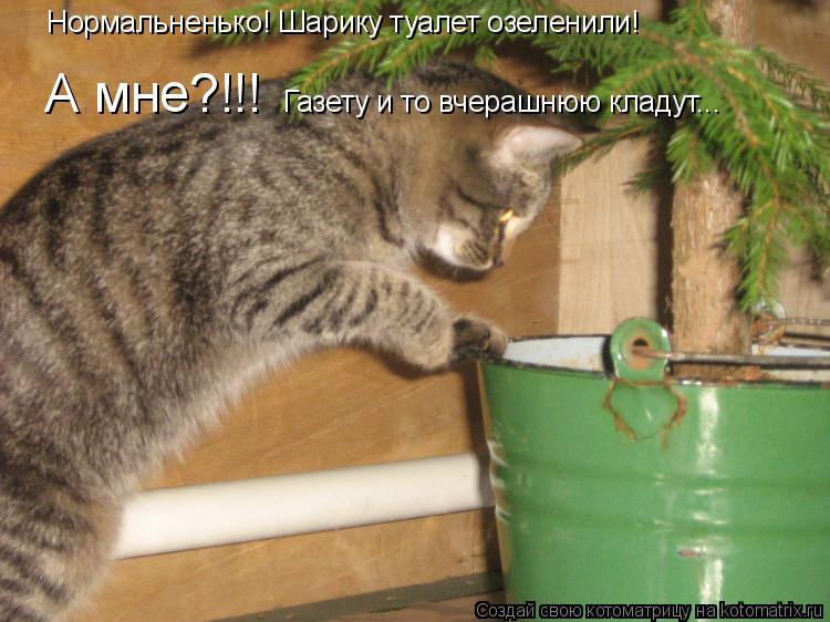 Котоматрица: Нормальненько! Шарику туалет озеленили! А мне?!!!  Газету и то вчерашнюю кладут...
