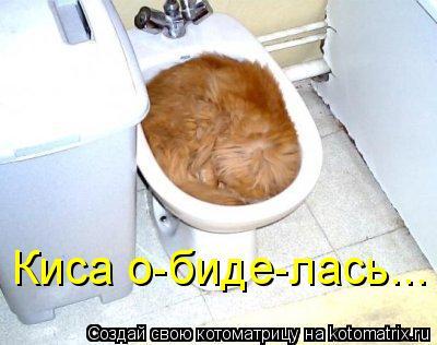 Котоматрица: Киса о-биде-лась...