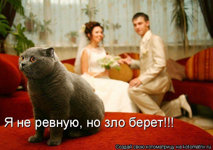 Котоматрица: Я не ревную, но зло берет!!!