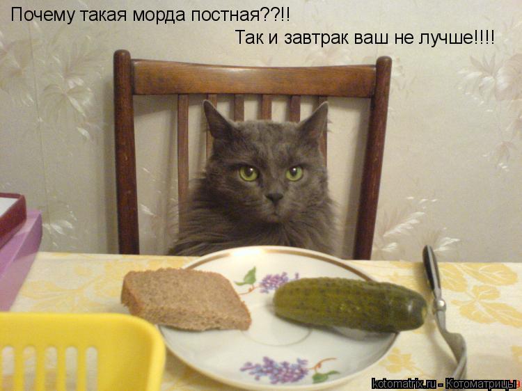 Котоматрица: Почему такая морда постная??!! Так и завтрак ваш не лучше!!!!