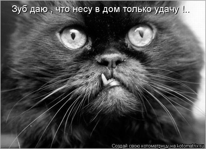 Котоматрица: Зуб даю , что несу в дом только удачу !..
