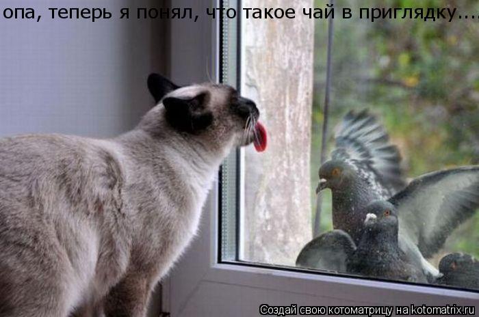Котоматрица: опа, теперь я понял, что такое чай в приглядку....