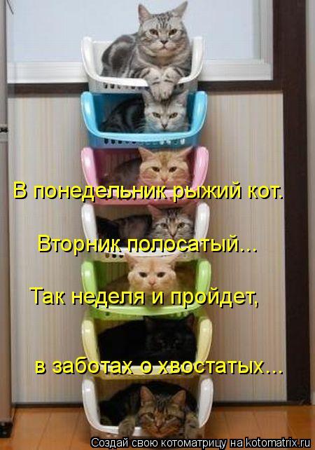 Котоматрица - В понедельник рыжий кот. Вторник полосатый...  Так неделя и пройдет,