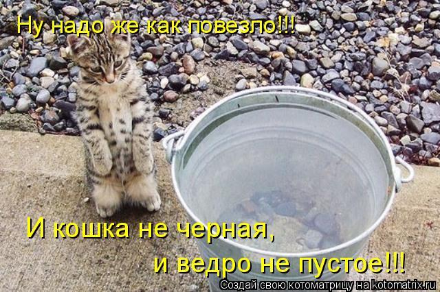 Котоматрица: Ну надо же как повезло!!! И кошка не черная,  и ведро не пустое!!!