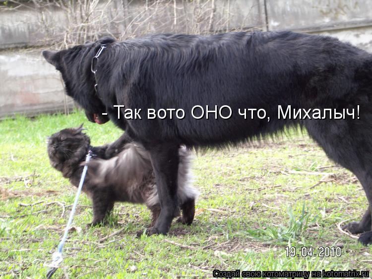 Котоматрица: - Так вото ОНО что, Михалыч!