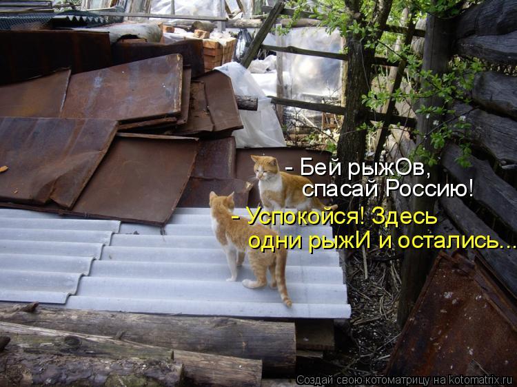 Котоматрица: - Бей рыжОв, спасай Россию! - Успокойся! Здесь  одни рыжИ и остались...