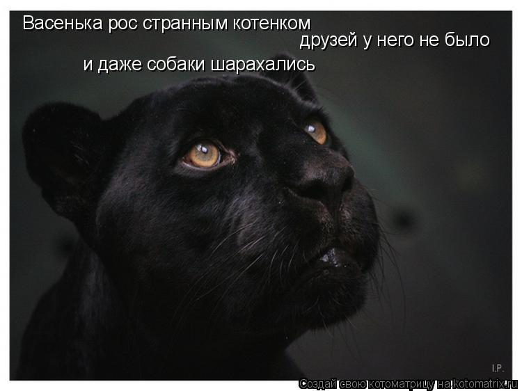 Котоматрица: Васенька рос странным котенком друзей у него не было и даже собаки шарахались